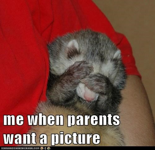 covering,embarrassed,ferrets,picture,hiding,parents