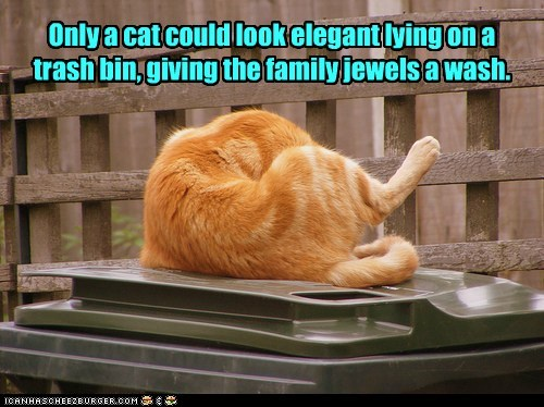 elegant,bin,clean,trash,wash,captions,family jewels,Cats