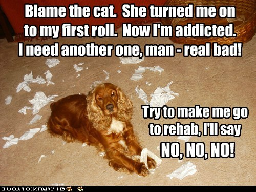 Blame the cat. She turned me on to my first roll. Now I'm addicted. I need another one, man - real bad! Try to make me go to rehab, I'll say NO, NO, NO!