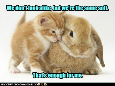 fur,interspecies,Fluffy,friends,captions,soft,rabbit,Cats,bunny