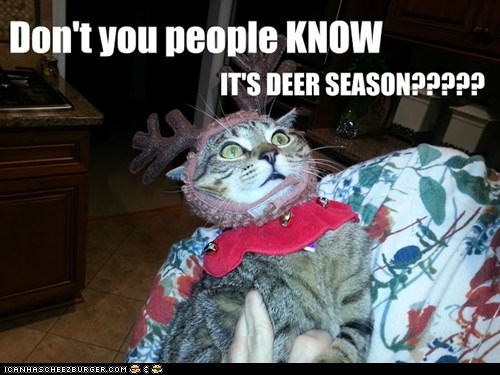 danger antlers deer season captions deer hunting Cats hunter - 6759536896