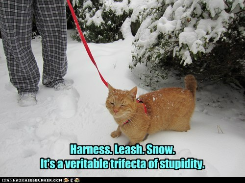 Harness. Leash. Snow. It's a veritable trifecta of stupidity.