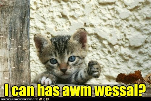 fun paw captions arm Cats - 6759847936
