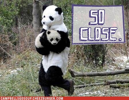 so close panda costume panda bears - 6759891968