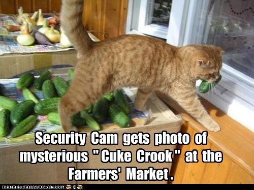steal,farmers market,cucumber,captions,cuke,Cats,thief