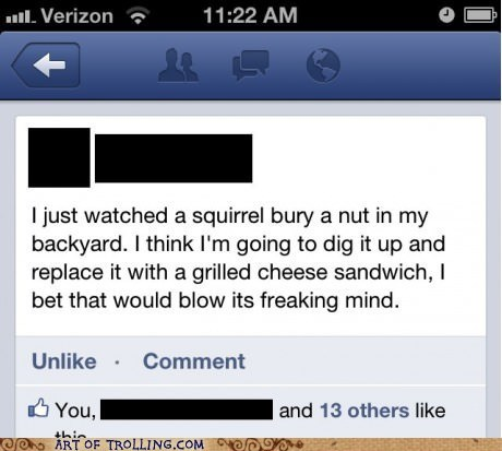 squirrels,facebook,noms