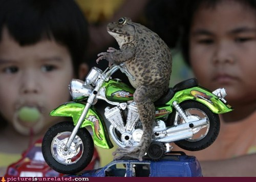 toad mini motorcycle