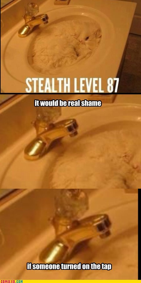 stealth,cat,water,it would be a shame,sink