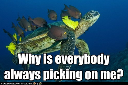 picking on,song,turtles,swimming,fish