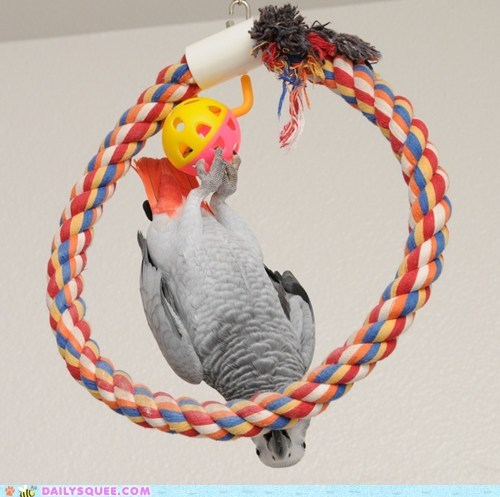 reader squee parrots birds toys squee - 6760219648