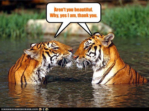 narcissism,thank you,annoying,tigers,beautiful
