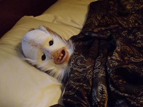 bed creepy alien taxidermy