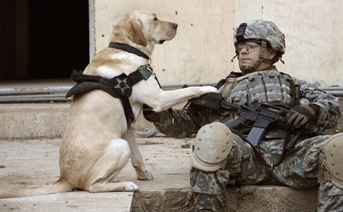 mans-best-friend dogs labrador veteran veterans day solider - 6760549888