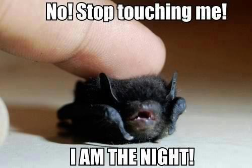 tiny bats captions angry night no stop stop touching me squee - 6760560128
