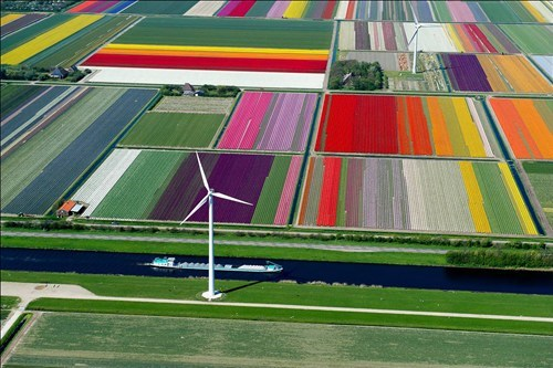 Netherlands flowers windmill pretty colors field