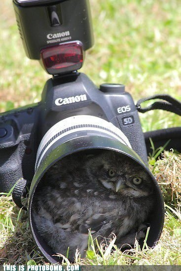 nesting place,camera,animals