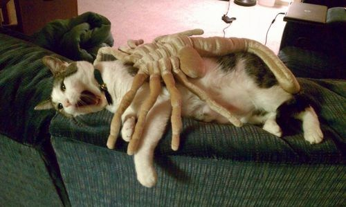 scifi,face hugger,nerdgasm,alien,Cats,Hall of Fame,best of week