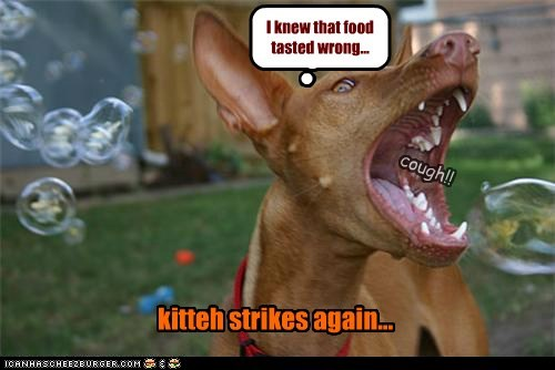 cat dogs strikes again bubbles what breed sabotage