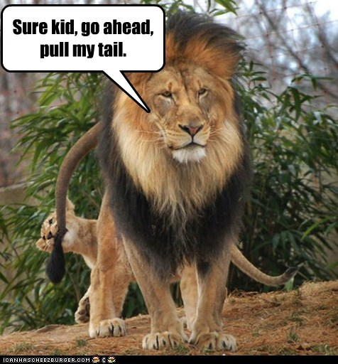 Sure kid, go ahead, pull my tail.