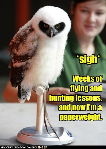 disappointed,scale,paperweight,owls,sigh,hunting,flying