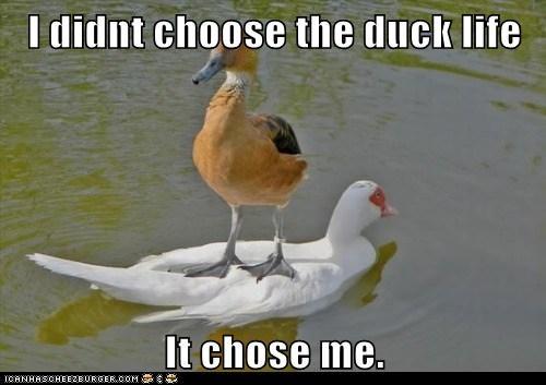 standing ducks swimming thug life - 6761420032
