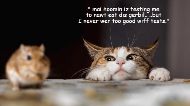 funny memes Memes Cats cat memes - 6761733