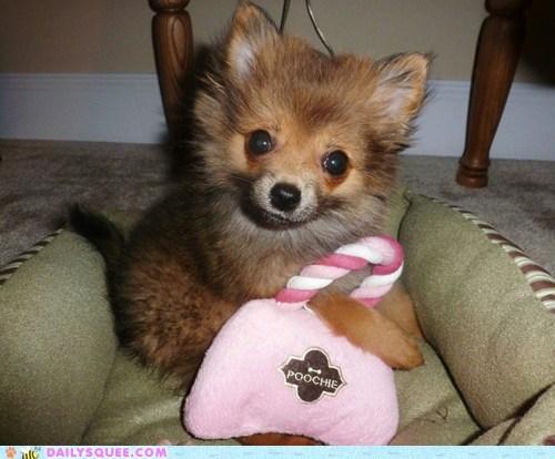 pomeranian dogs purse reader squee pets designer handbag squee - 6761820160
