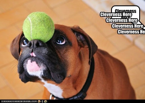 Cheezburger Image 6761904128