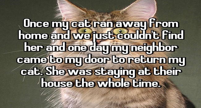 lolcats lost animals loves dogs lolz cute lol love happy stories Cats - 6762245