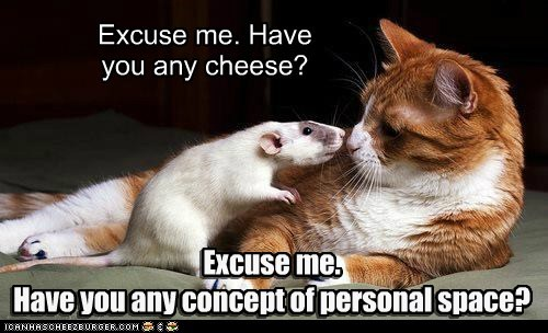 cheese rat captions nom bubble food personal space Cats - 6762449664