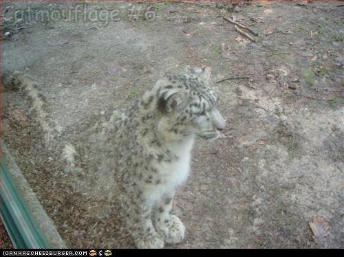Catmouflage #6