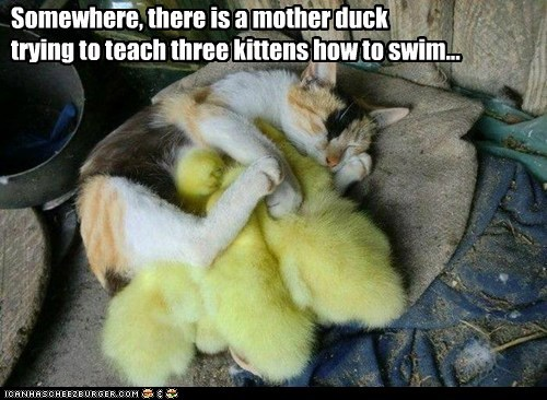 Somewhere, there is a mother duck trying to teach three kittens how to swim...