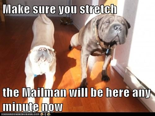 dogs mailman what breed stretching