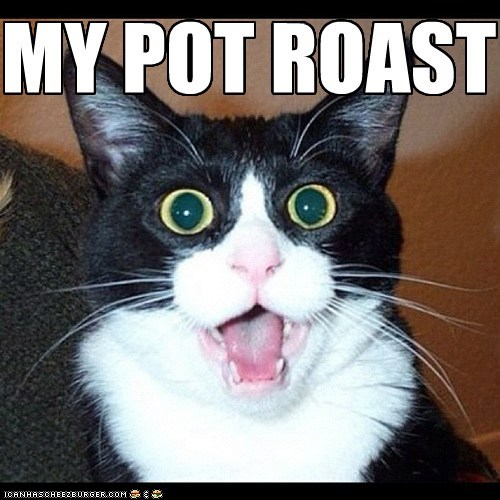 cooking gasp captions nom ruined surprise pot roast dinner food Cats - 6763229440