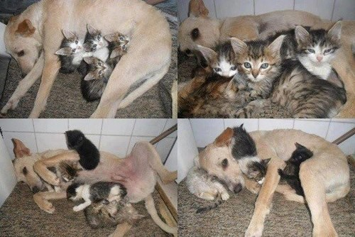 cat dogs kitten cuddles kittehs r owr friends - 6763384832