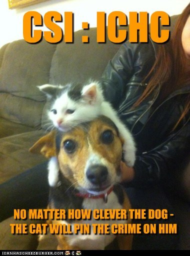 CSI : ICHC NO MATTER HOW CLEVER THE DOG - THE CAT WILL PIN THE CRIME ON HIM