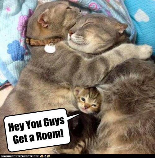 Hey You Guys Get a Room!