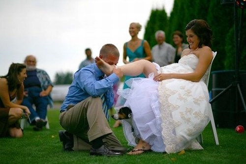 garter toss,puppy,silly,dress,dogs