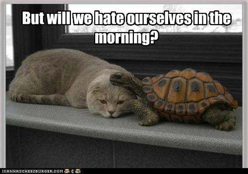 seducing,turtles,morning,hesitant,Cats