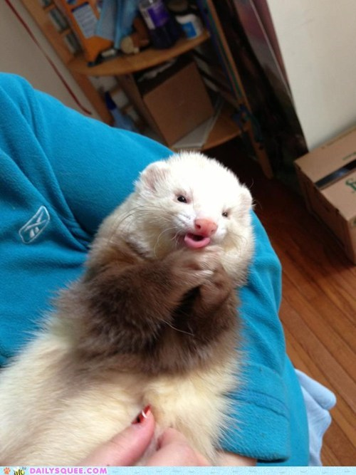 reader squee,pets,ferrets paws,squee