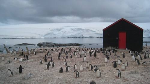 arctic,cabin,penguin,animals