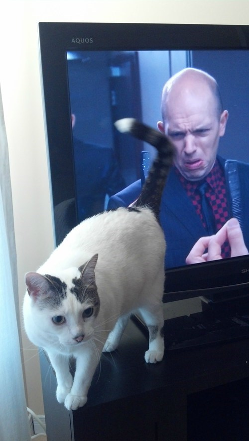 timing,gross,pause,Cats
