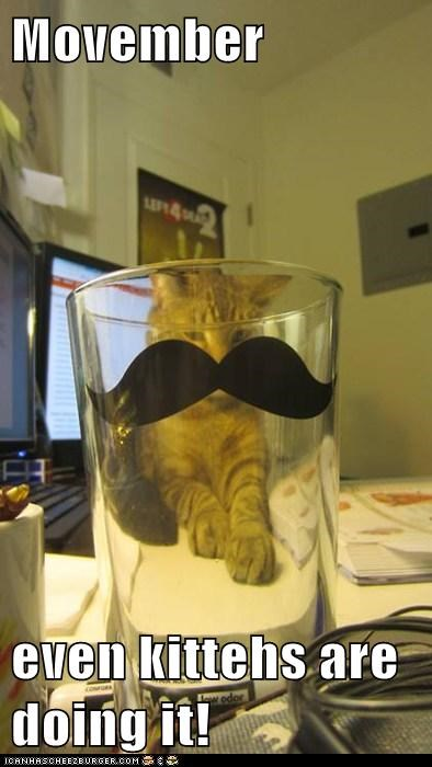 mustache november movember captions glass Cats - 6765467136