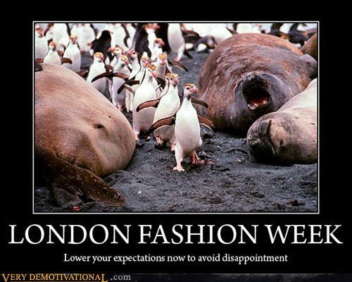fashion,walrus,week,penguin