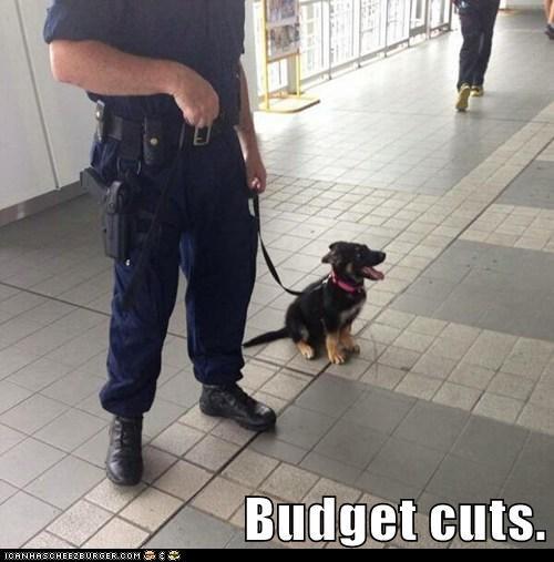 Budget cuts.
