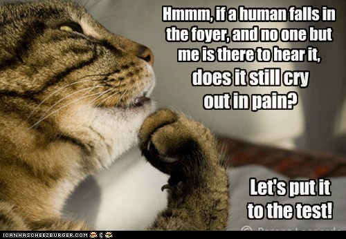captions hear philosophy push test Cats fall - 6766058496