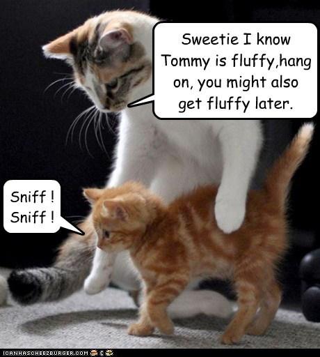 Sweetie I know Tommy is fluffy,hang on, you might also get fluffy later. Sniff ! Sniff !