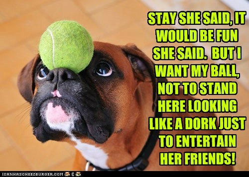 dogs tricks boxer tennis ball They Said - 6766183424