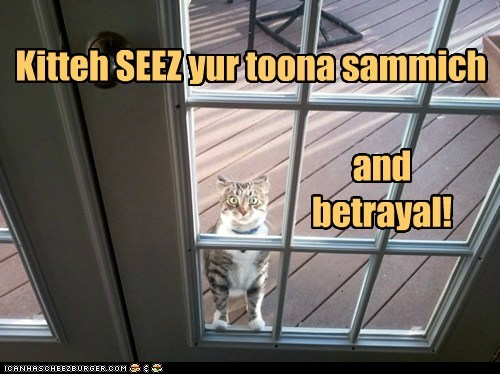 Kitteh SEEZ yur toona sammich and betrayal!