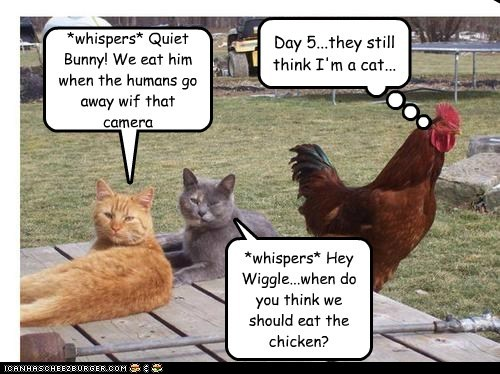 Cleverness Here Cleverness Here Day 5...they still think I'm a cat... Cleverness Here *whispers* Hey Wiggle...when do you think we should eat the chicken? *whispers* Quiet Bunny! We eat him when the humans go away wif that camera